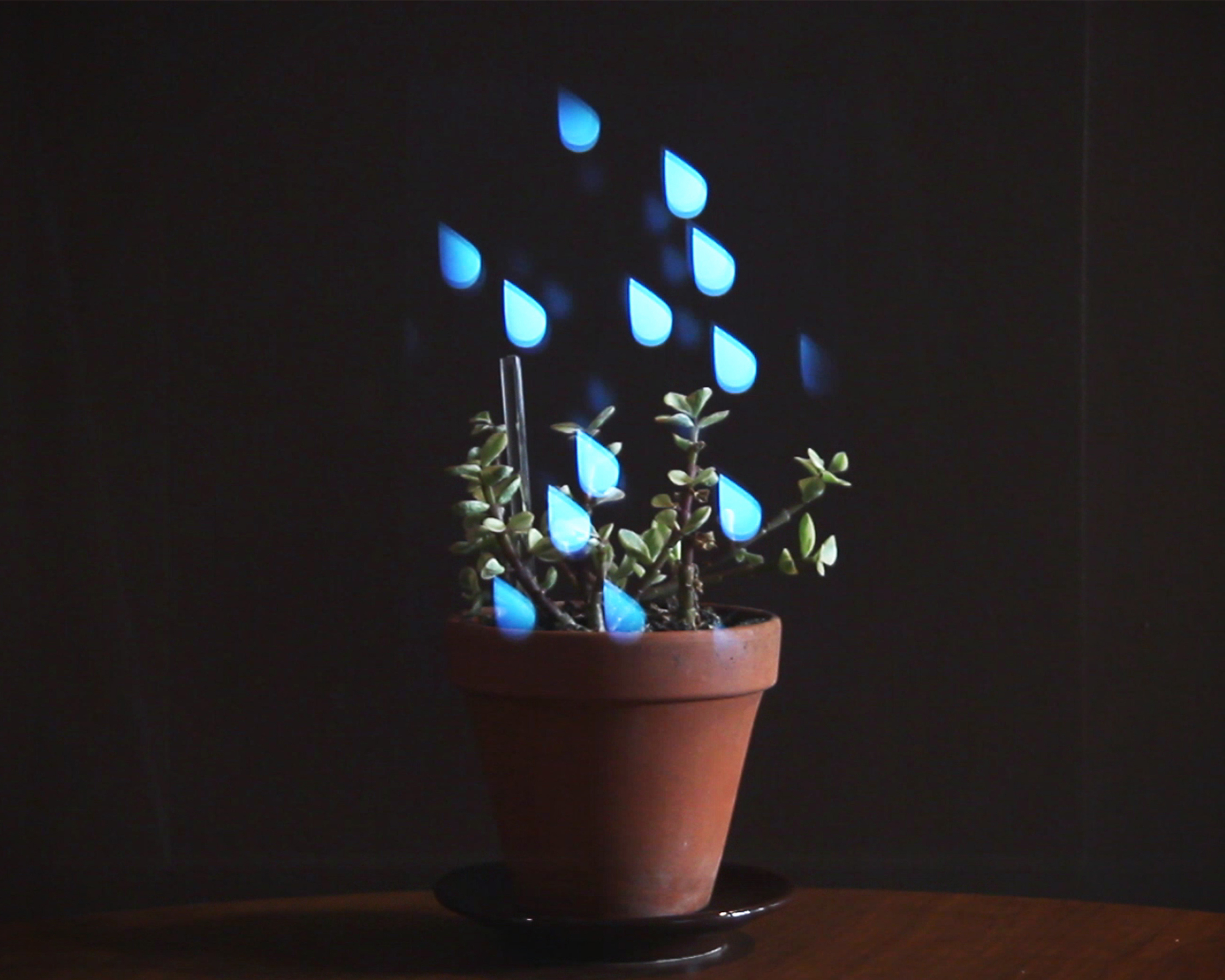 Leafy_Using augmented reality to enhance human-plant interaction.