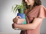 Needy Plant