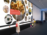 CMNH Curate - Reflection